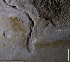 うっすらと見えるトゲの化石