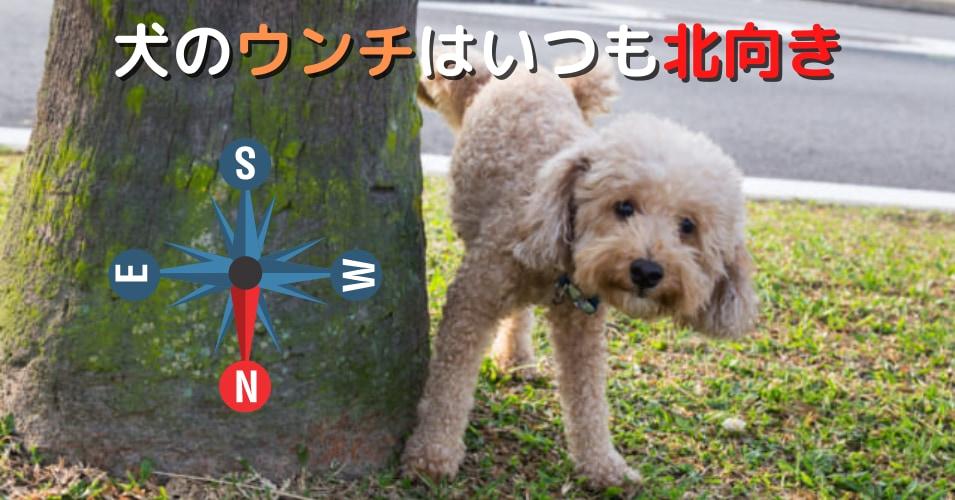 犬は「地球の磁気」を感知する。うんちのときに北を向くって知ってた?