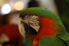 鳥は数秒間しかレム睡眠にならず、身体が弛緩する時間が短い