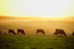 家畜向きの動物がユーラシア大陸にいた