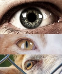 円形の瞳孔、縦長の瞳孔、横長の瞳孔にはそれぞれ特徴がある