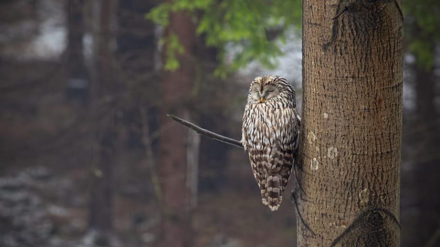 なぜ寝ている鳥は枝から落ちないのか? 鳥類の足の爪に秘密があった