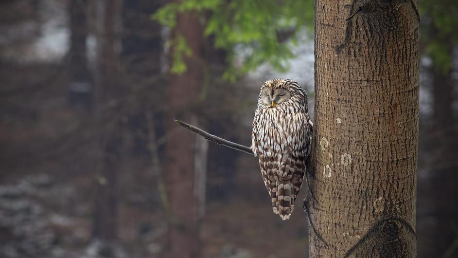 なぜ鳥は眠っているときに枝から落ちないのか?