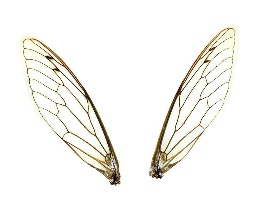 昆虫の翅の起源が判明