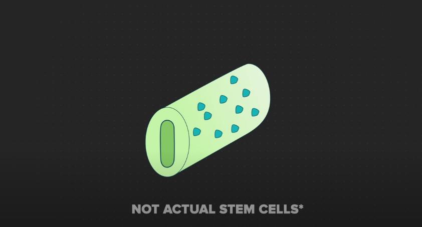 受精卵が成長すると幹細胞に囲まれたチューブを形成する