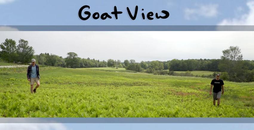 ヤギの視野