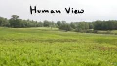 人間の視野