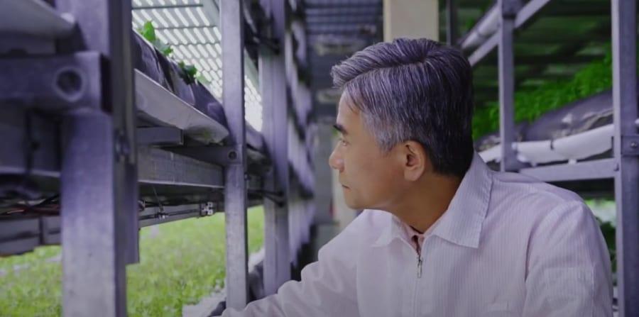 YesHealth Groupは10年以上、垂直農場を研究してきた