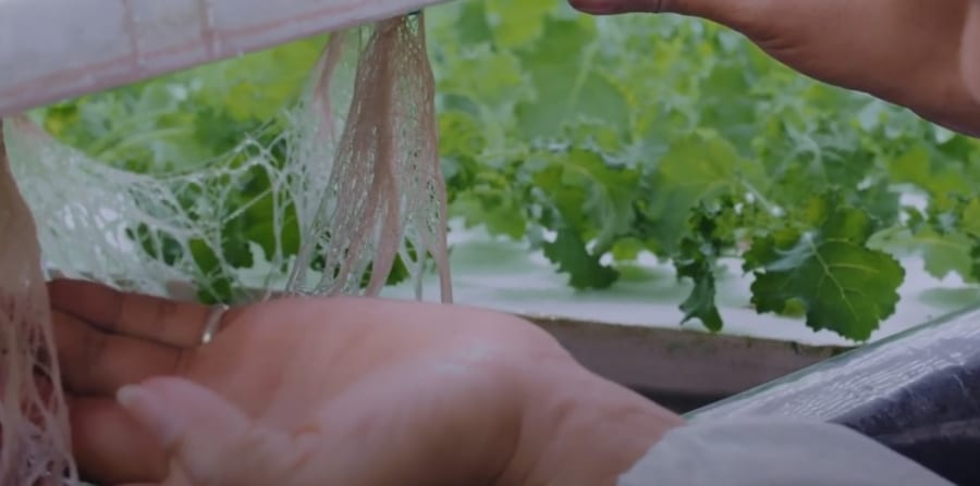 土壌を必要としない水耕栽培