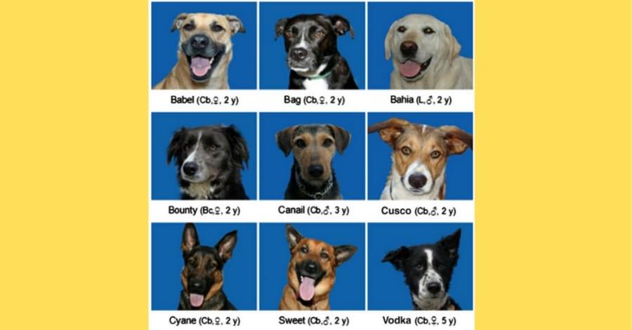 イヌは「見た目が大きく違う他犬種」を同じイヌだと認識できる!