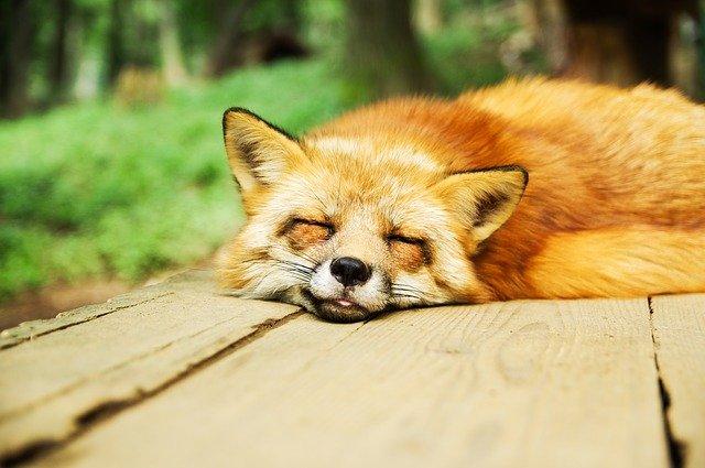 あらゆる生物は睡眠状態を取る