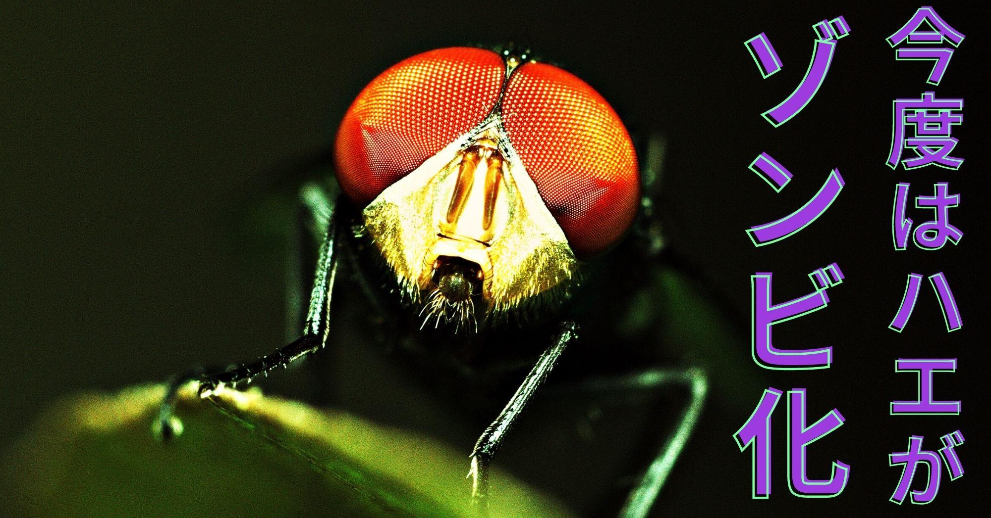 ハエゾンビを作るゾンビ化菌が立て続けに2種類も発見された