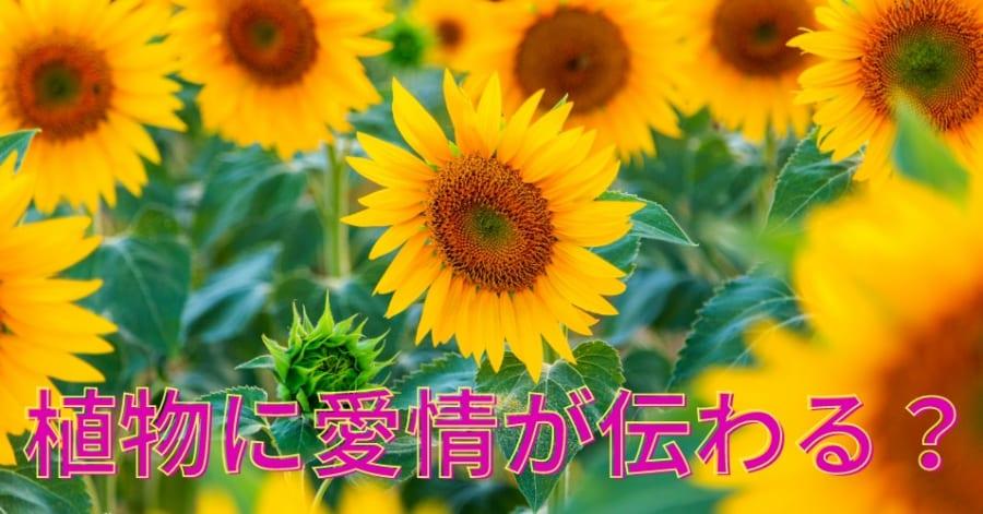植物は「なでて育てる」と頑丈に育つという驚きの事実! 骨がないのに立っていられる理由って知ってる?