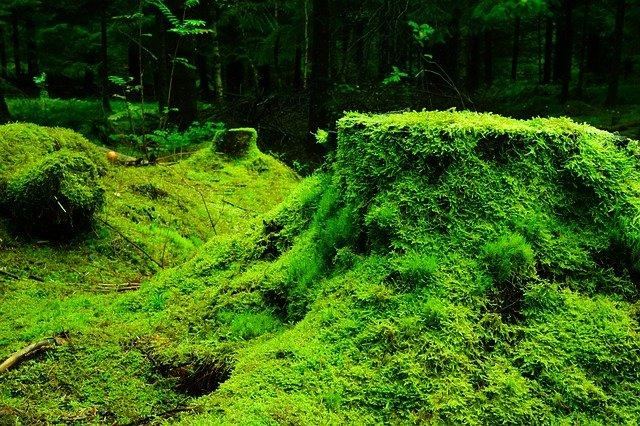 コケが土の生成を促進