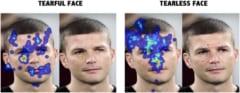アイトラッキングで示される視線の動きと、凝視箇所のパターン。