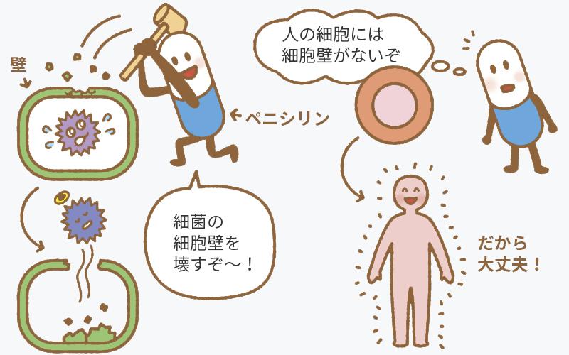 抗菌薬の作用。