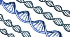 新たに見つかった遺伝的要因は違いをうむ個性の仕組みだった