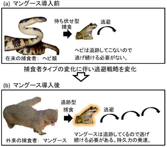 予想されるカエルの行動変化