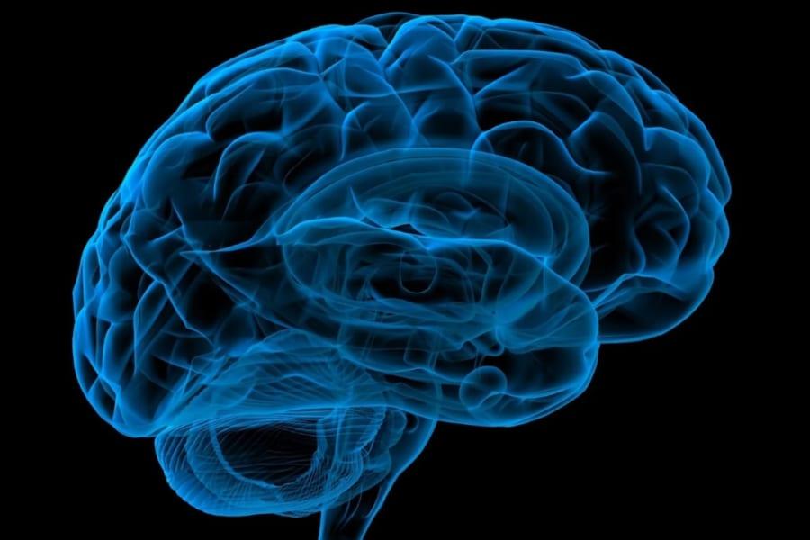 脳が自分にかかわる情報を「えり好み」して記憶する仕組みを解明!