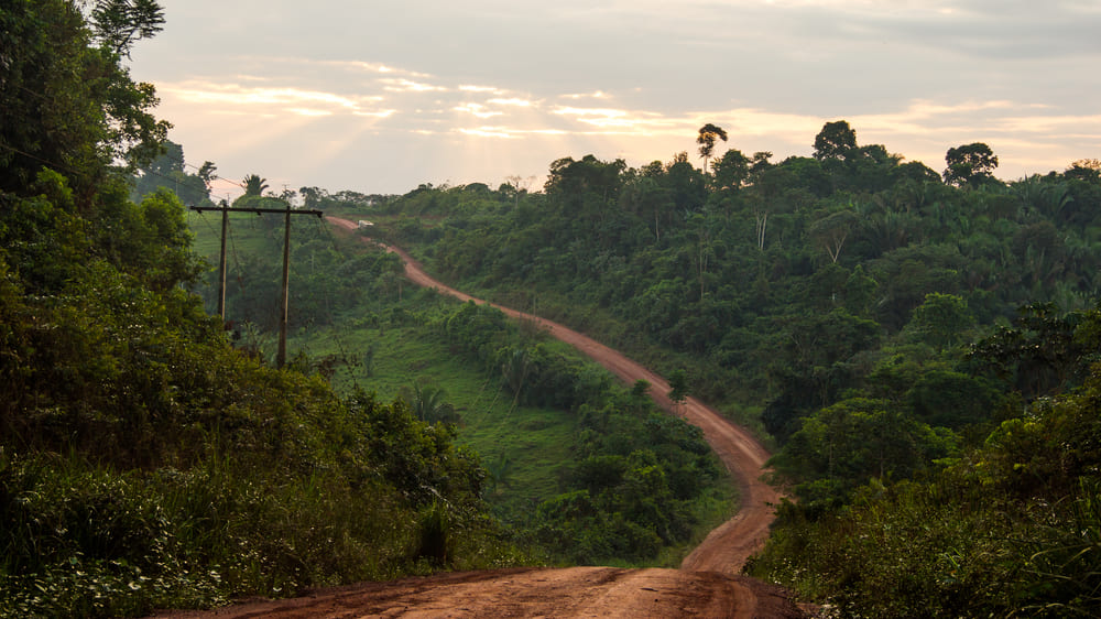 アマゾンの生態系を脅かす隠された道路をAIが発見する
