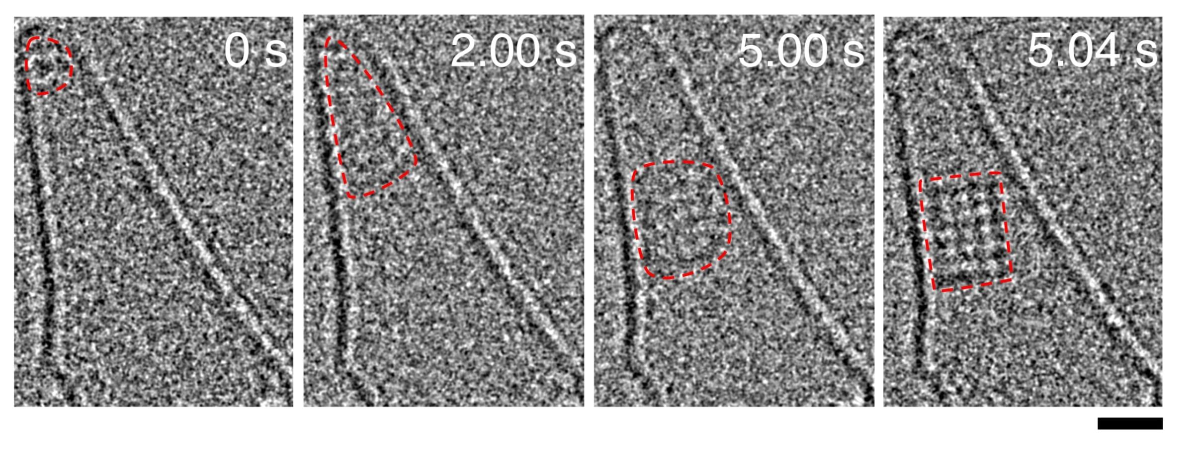 NaCl結晶核が形成される様子を捉えた原子分解能電子顕微鏡動画(40ミリ秒/フレーム)。