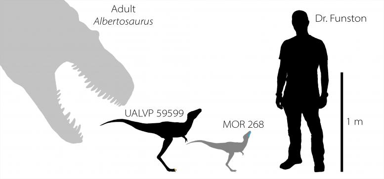 ティラノサウルスの赤ちゃんのサイズ