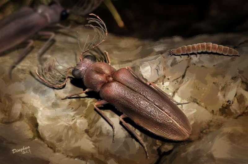 1億年前の発光甲虫の復元イメージ