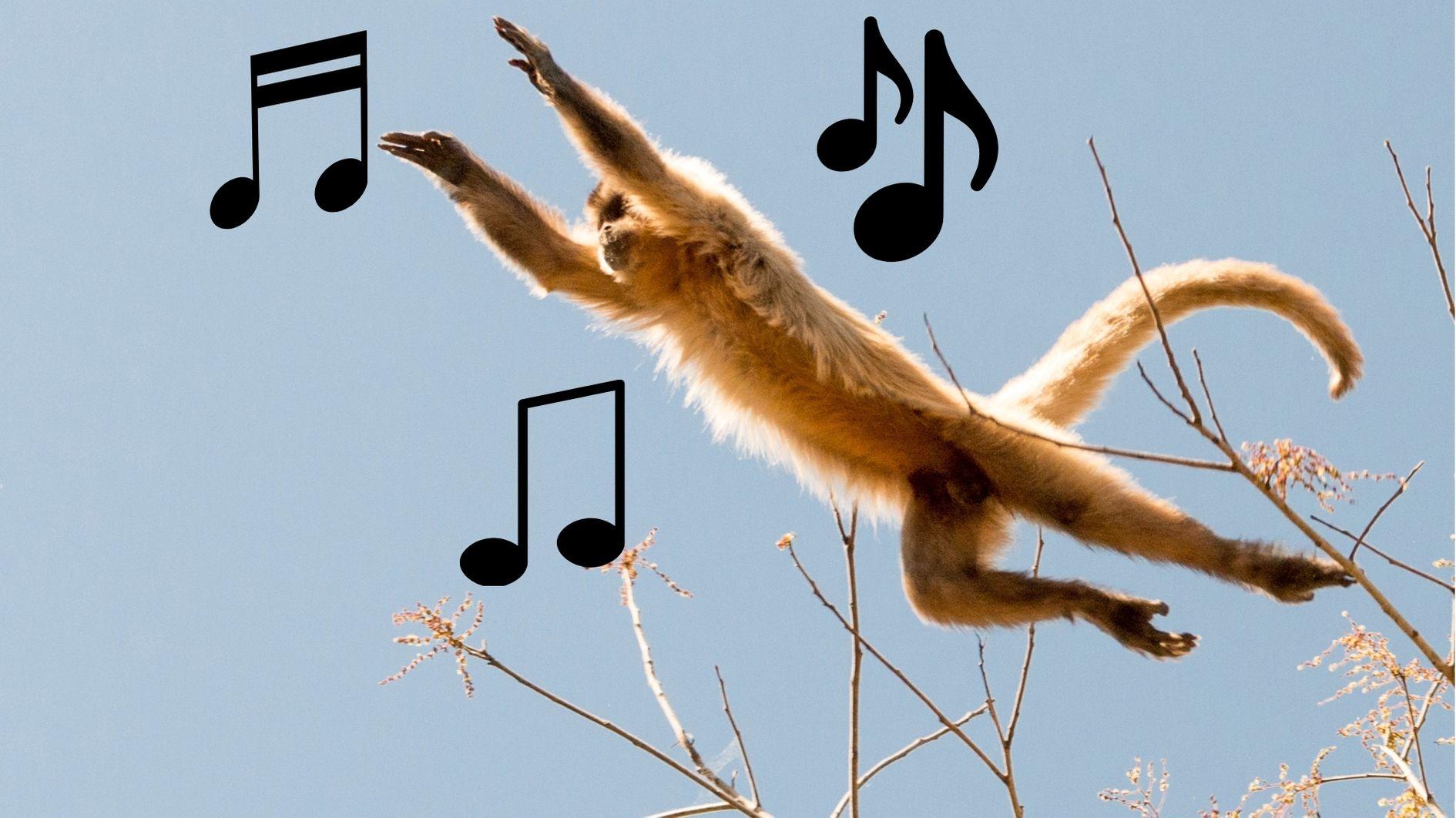 音楽の起源はサルの木から木へのジャンプだった