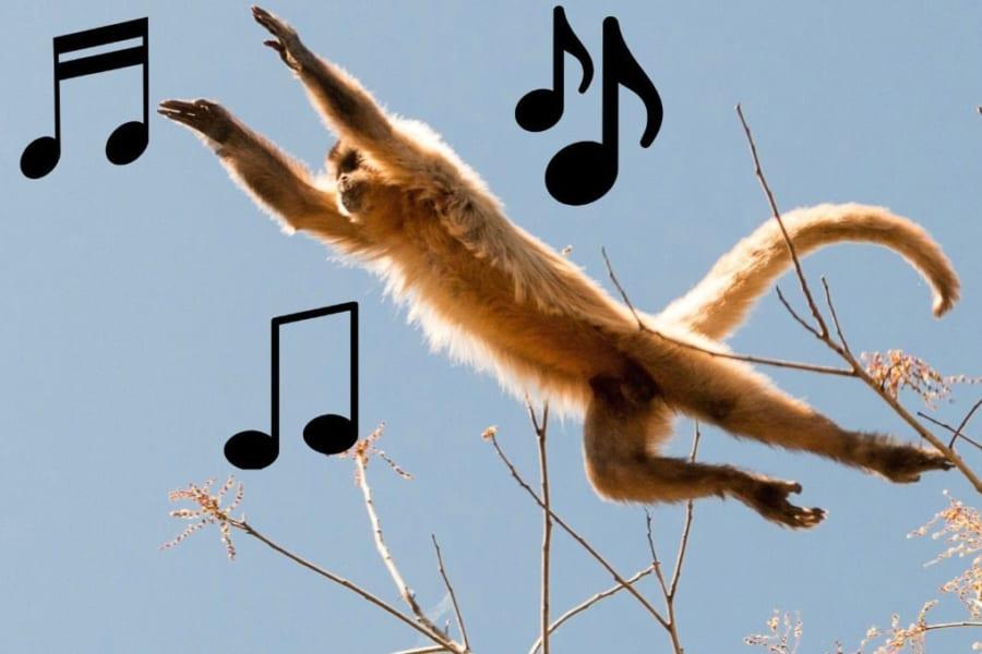 音楽の起源は「サルの木登りジャンプ」にあったという驚異的な研究結果