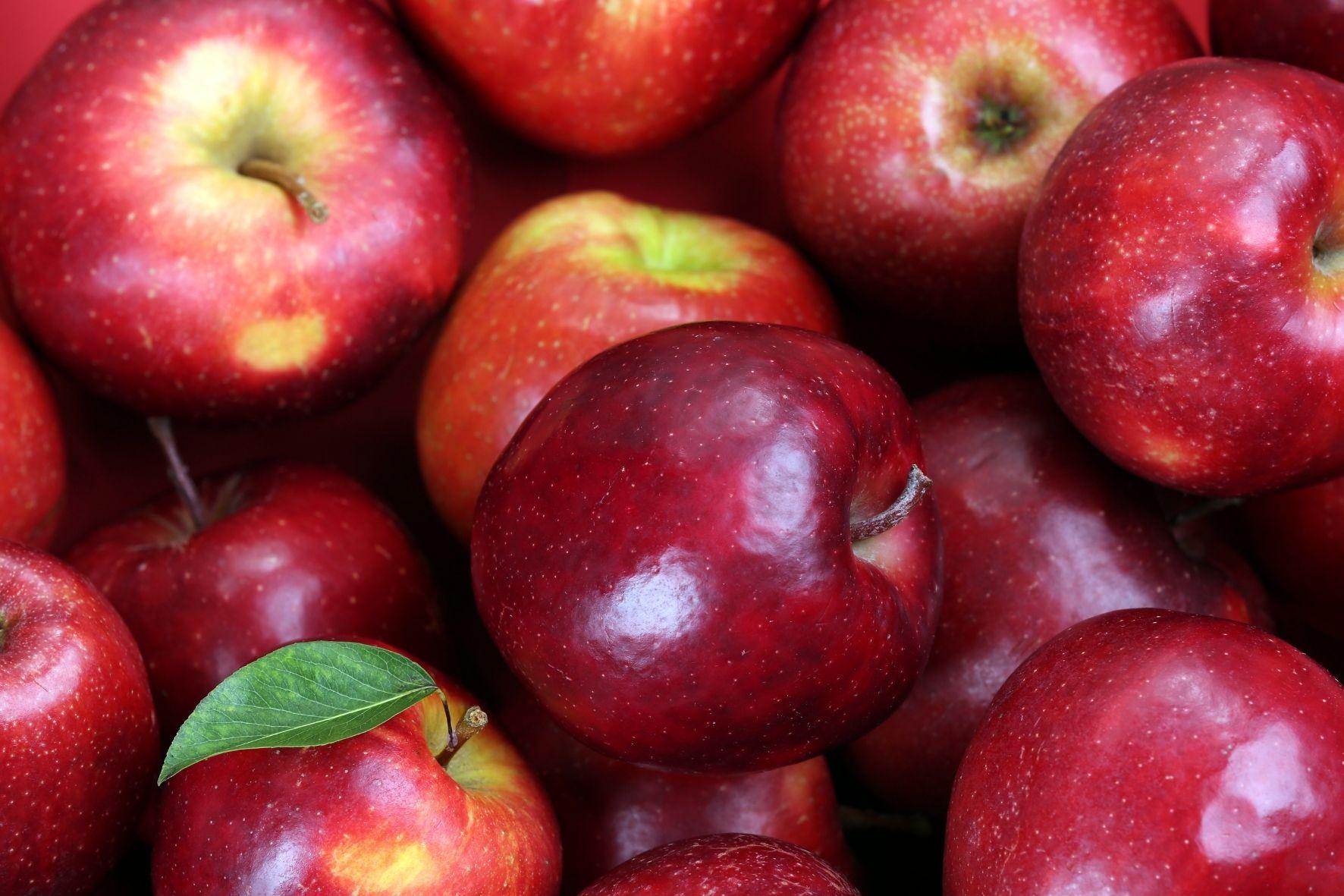 リンゴに含まれる成分には脳細胞の数を増やす効果があった