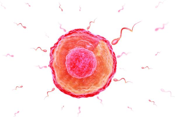 一部の精子は「毒」を放出して生命の競争に勝っていた
