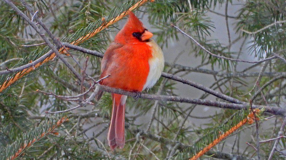 半分オス、半分メスの小鳥を発見