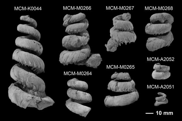 8点の化石標本