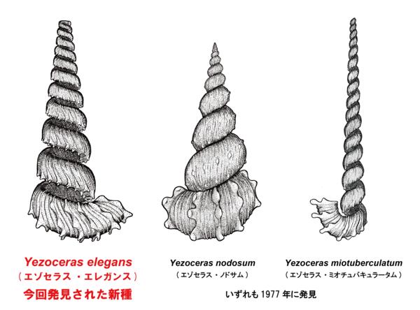 3種のエゾセラス属