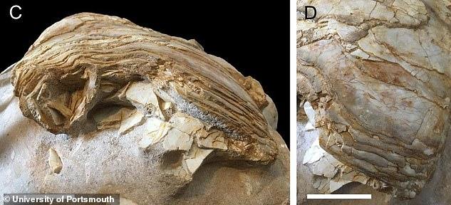 調査された化石
