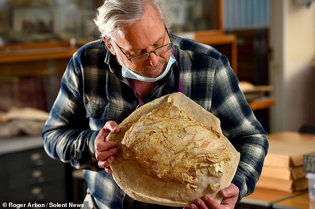 ジョーズと同サイズ!? 偶然から「史上最大級のシーラカンス」の化石を発見