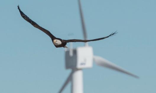 風力発電機のバードストライクを解決! 鳥が近づくとプロペラを止める「スマートカメラ」がワシの命を救う