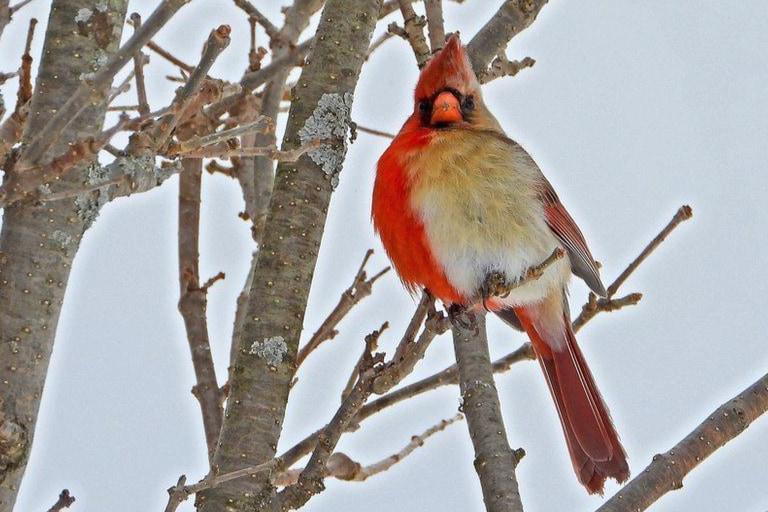 半分がオス、半分がメスの小鳥を発見!「百万羽につき1羽」の激レア個体(アメリカ)