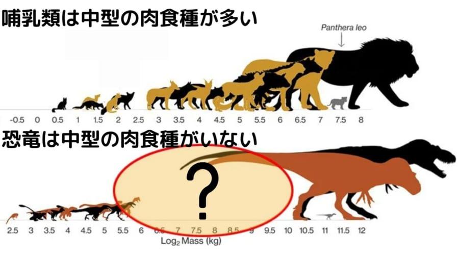 哺乳類は様々なサイズの肉食種がいるが、恐竜では中型の肉食種はあまりいない