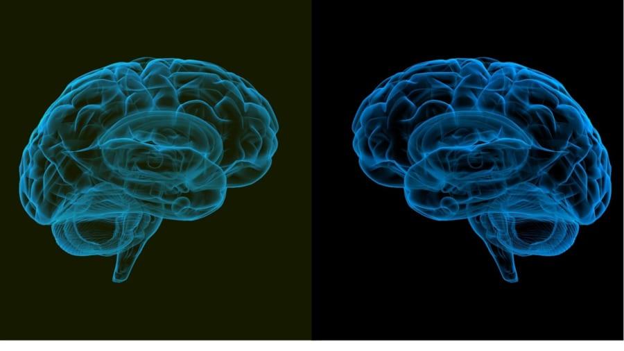 発見された61個全ての遺伝子を置き換えればより完璧なネアンデルタール人の培養脳ができる