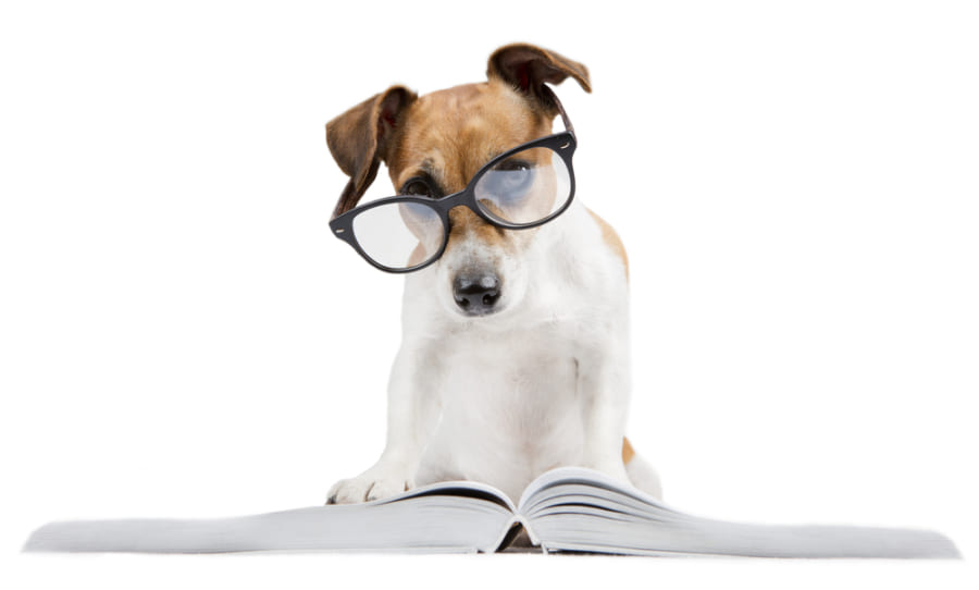 記憶力の高さは「犬種」で決まる!? 学習訓練に向く犬、向かない犬とは