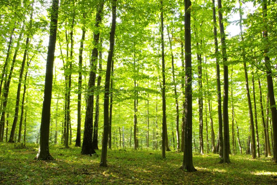森林浴の習慣が労働者の「ストレス対処力」を高めることが判明!(筑波大学)