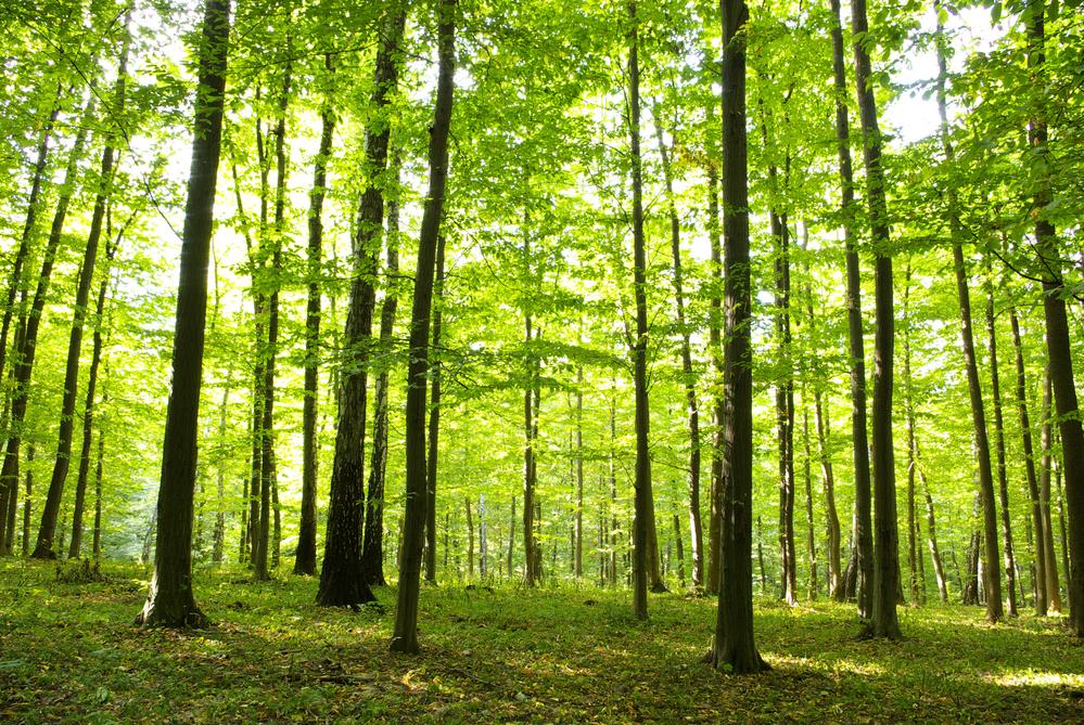 森林浴がストレス対処力を高める?
