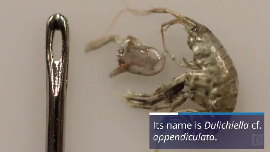 「まばたきの1万倍速」でハサミを閉じる小エビを発見!