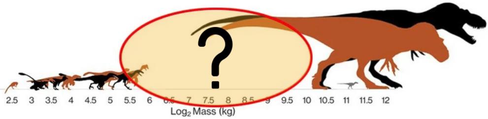 体重100キロ以上1トン未満の中型肉食恐竜はあまり知られていない