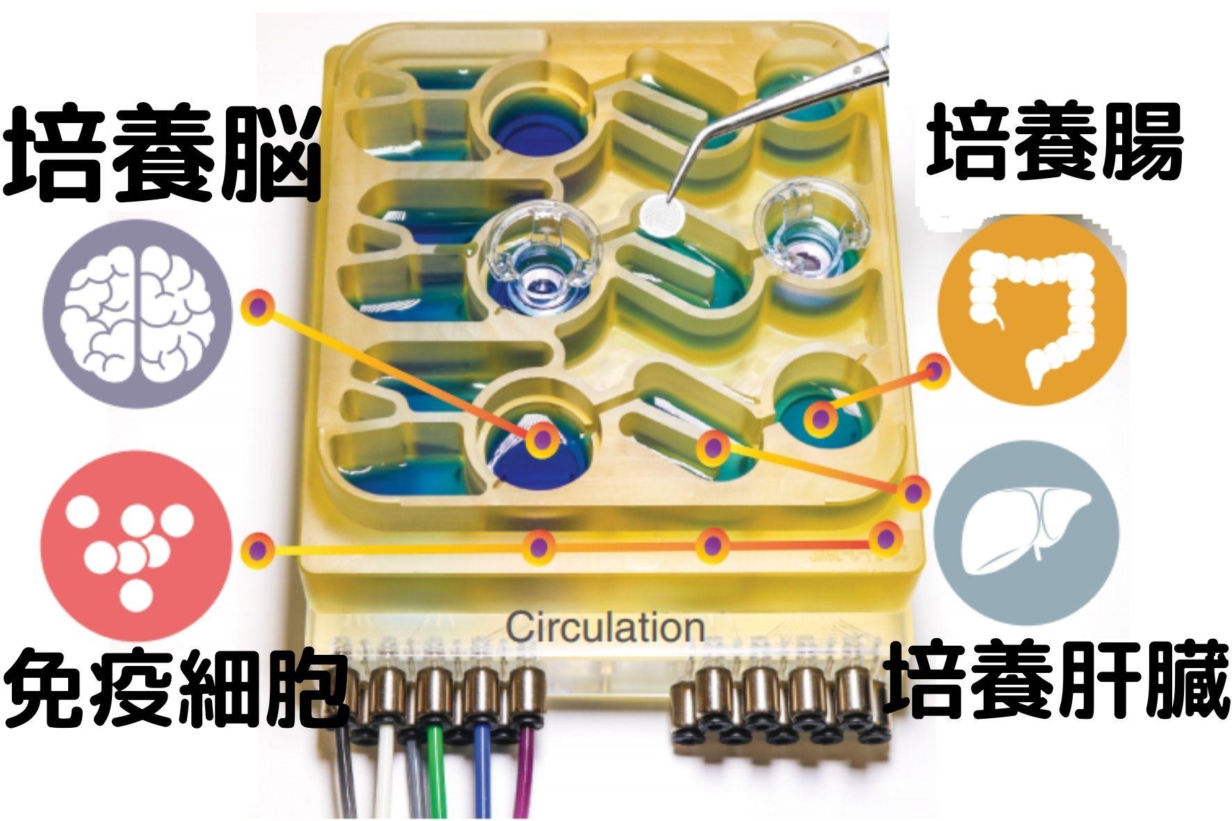 培養臓器を組み合わせた疑似人体が実際の実験に投入され始めている