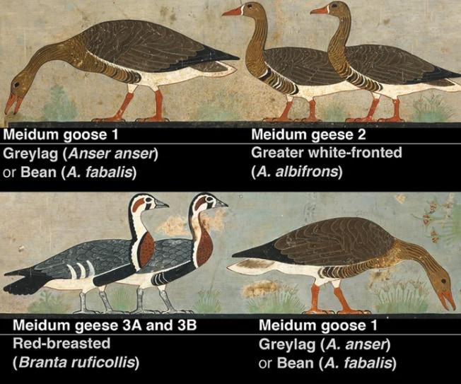 左下以外は現生種に一致