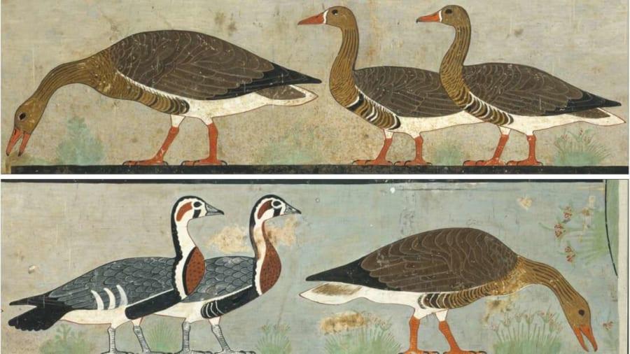 古代エジプトの壁画から「新種の鳥類」を発見 すでに絶滅した種だった?