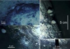 海底岩に見つかった固着生物