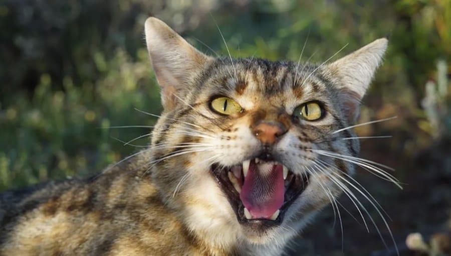 逆転の発想! ネコを放って在来種のサバイバル力を強化させる実験